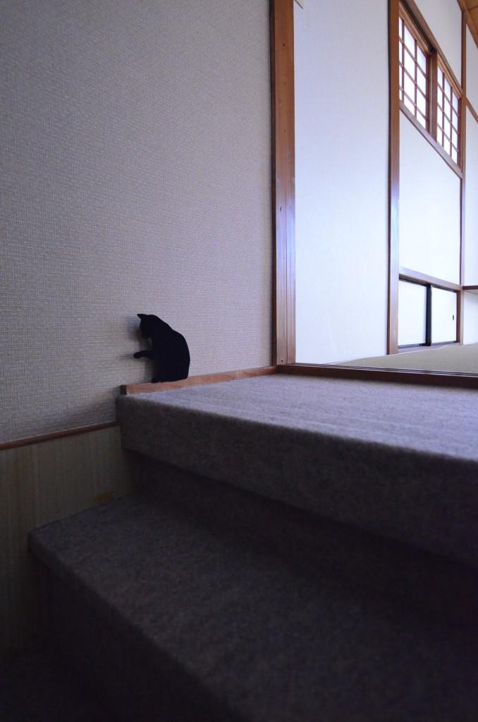 猫ライト (2)